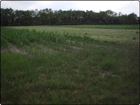 Dove Field Picture
